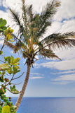 Palm tree on sky background Royalty Free Stock Photos