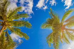 Palm tree on sky background Stock Image