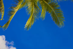 Palm tree on sky background Stock Images