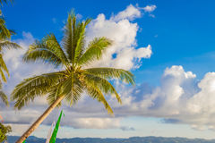 Palm tree on sky background Stock Photo
