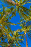 Palm tree on sky background Royalty Free Stock Photo