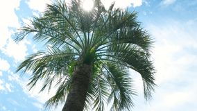 Palm tree on sky background. Tropical plant, sun and clouds. Trip of a lifetime stock footage
