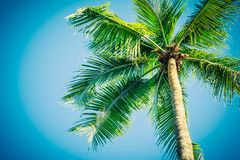 Palm tree on sky Stock Photo