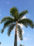 Palm tree and sky. Beautiful scene of palm tree on white cloud and blue sky background Royalty Free Stock Images