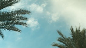 Palm Tree Sky Cloud Time Lapse. High quality 10bit footage. Very easy color correction stock video footage