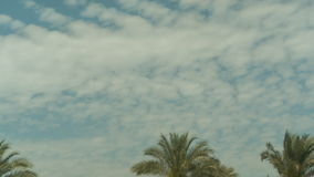 Palm Tree Sky Cloud Time Lapse. High quality 10bit footage. Very easy color correction stock footage