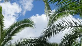 Palm Tree Sky Cloud Time Lapse. Background stock video footage