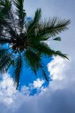 Palm tree and the sky Royalty Free Stock Photos