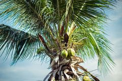 Palm tree on the sky Royalty Free Stock Photography