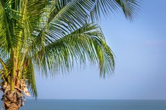 Palm tree on the sky Royalty Free Stock Images