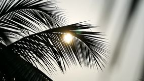 Palm tree and sky Kerala India. Yoga tour by Yantra Kerala India sky and palm stock video