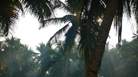 Palm tree and sky Kerala India. Yoga tour by Yantra Kerala India sky and palm stock footage