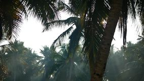 Palm tree and sky Kerala India. Yoga tour by Yantra Kerala India sky and palm stock video footage