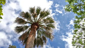 Palm tree in the sky. With moving clouds driven by wind
