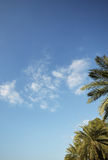 Palm tree and sky Royalty Free Stock Image
