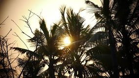 Palm tree and sky sunset Kerala India stock footage