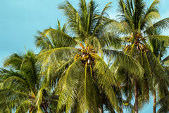 Palm tree and sky tropical island photo. Exotic summer holiday Royalty Free Stock Photos