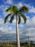 Palm tree. Sky with white clouds Royalty Free Stock Photography