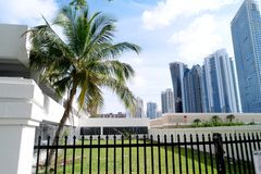 Palm Tree and Skyline View Stock Photography
