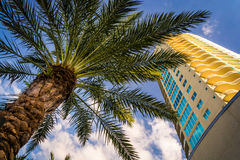 Palm tree and skyscraper in Saint Petersburg, Florida. Stock Photography