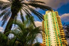 Palm tree and skyscraper in Saint Petersburg, Florida. Stock Photo