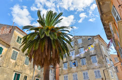 Palm tree on a small square in corfu. Town greece Stock Photos