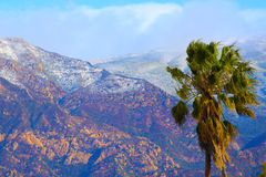 Palm Tree and Snow. Background on Santa Barbara foothills Royalty Free Stock Image