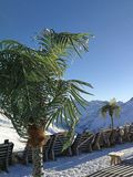 Palm tree, snow and relaxing on a snow-covered mountain peak. Davos, Switzerland stock images