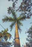 Palm Tree Soar Royalty Free Stock Images