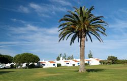 Palm tree and some traditional Portuguese houses. Royalty Free Stock Photo
