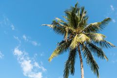 Palm tree. With some white clouds and blue sky on a sunny day in Goa, India stock photos