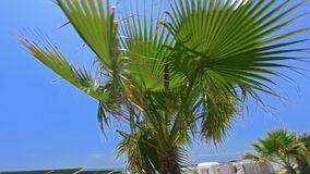 Palm tree in south country. Shot of palm tree with blue sky in background stock footage