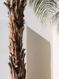Palm Tree, Southwestern architecture. Palm Tree detail, Palm Desert, California Stock Images