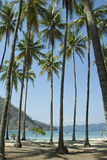 Palm Trees on Tortuga Island. Palm tree with speed boat Royalty Free Stock Photo
