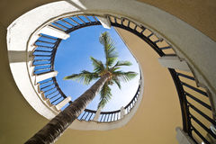 Palm tree through a spiral staircase. Against clear blue sky Royalty Free Stock Photo