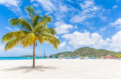 Palm Tree on St Martin Beach Royalty Free Stock Photos