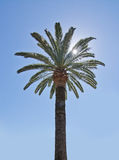 Palm tree with starry sun Royalty Free Stock Photos