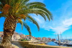 Palm tree by Stintino harbor Stock Images
