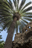 Palm tree with stone viaduct. Palm tree next to one of the Stone Viaducts carrying snaking paths, Park Guell, Barcelona, Spain Stock Photo
