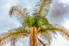 Palm Tree and Stormy Sky Royalty Free Stock Image
