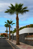 Palm tree street Royalty Free Stock Photos
