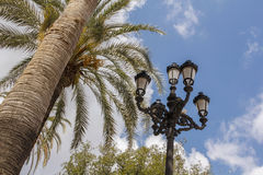 Palm tree and street light Royalty Free Stock Photography