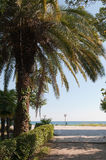 Palm tree in subtropics. Royalty Free Stock Photography