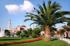 Palm tree on Sultanahmet. Garden of Hagia Sophia (Holy Wisdom) with a palm tree. Sultanahmet, Istanbul Royalty Free Stock Images