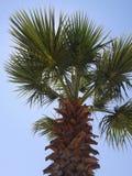 Palm tree. Summer palm tree Stock Photos