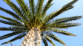 Palm tree summer background stock video footage