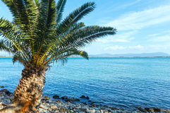 Palm tree on summer beach (Greece) Royalty Free Stock Photo