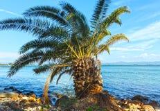 Palm tree on summer beach (Greece) Royalty Free Stock Photos
