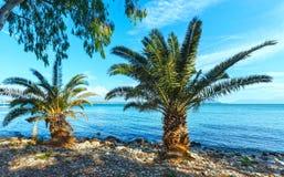 Palm tree on summer beach (Greece) Stock Photo