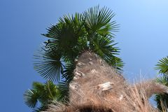 Palm tree summer. Palm tree and blue sky and summer Royalty Free Stock Photo